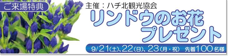 9/21,22,23先着100様にリンドウのお花プレゼント