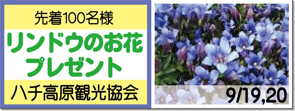 リンドウのお花プレゼント9/19,20