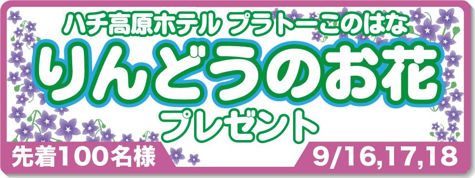 リンドウのお花プレゼント9/16,17,18