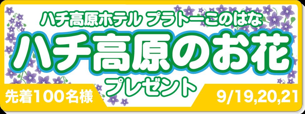 ハチ高原のお花プレゼント9/16,17,18