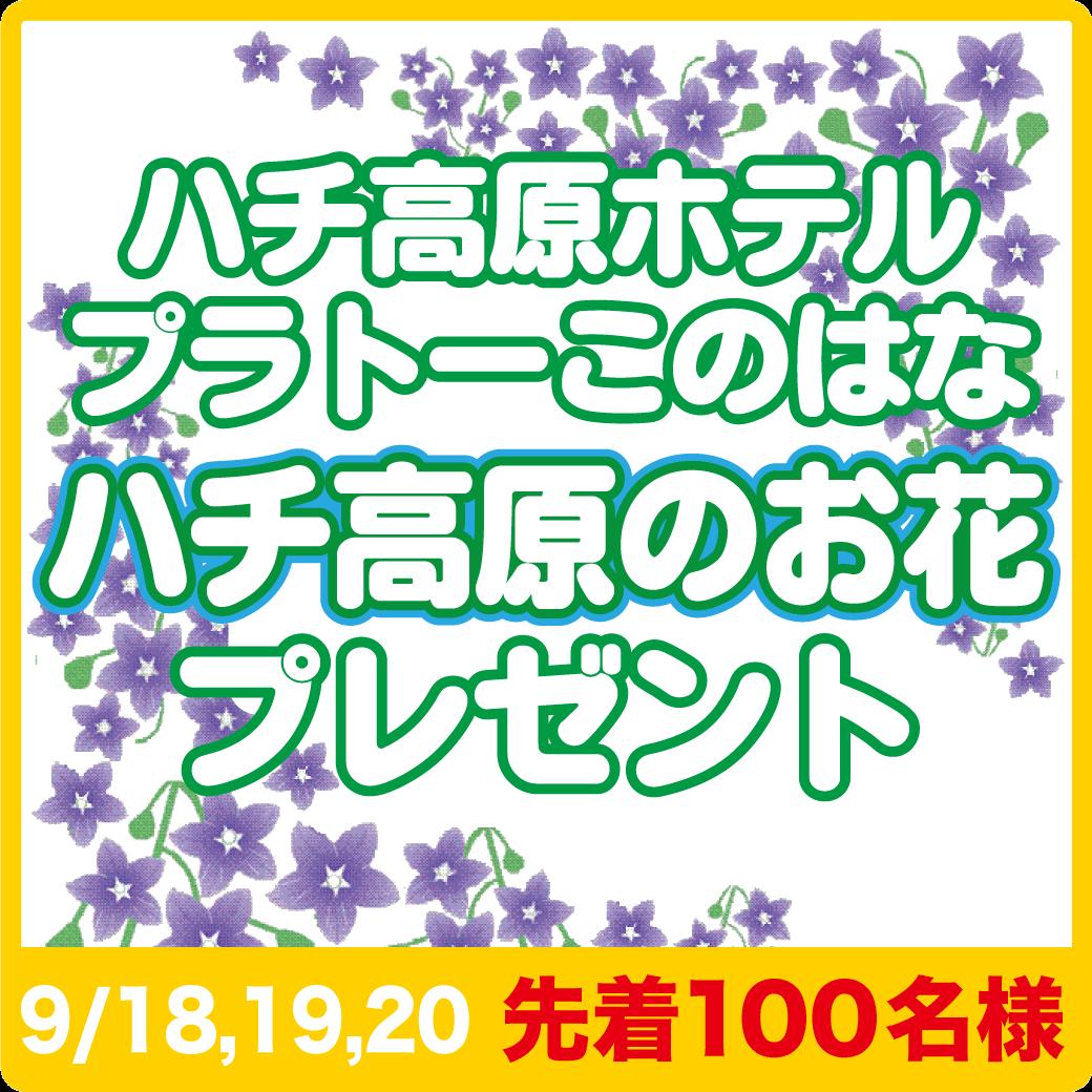 ハチ高原のお花プレゼント9/18,19,20